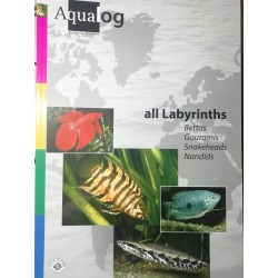 All Labyrinths